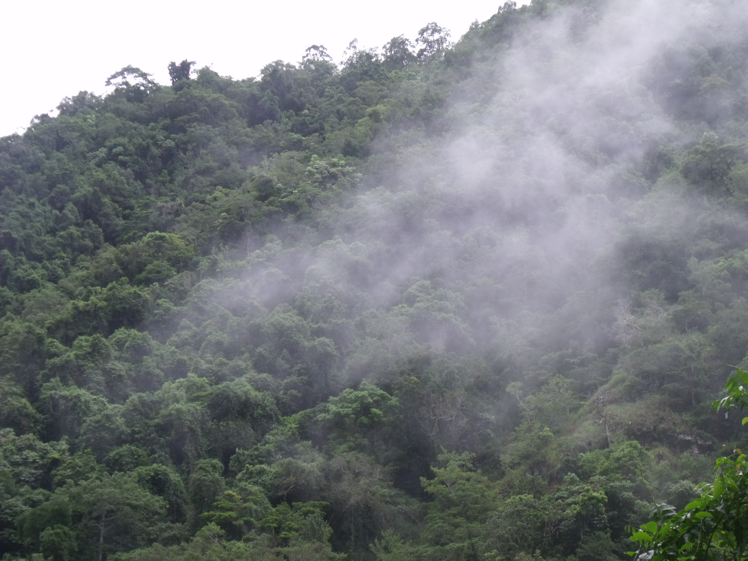 the negative effects of technology on the rain forest Current environmental issues:  acid rain can have devastating effects on aquatic  seems like the gem of science and technology but this has major harmful effects.
