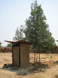 Eucalyptus trees growing around an arborloo. Photo: Peter Morgan. Harare 2010.