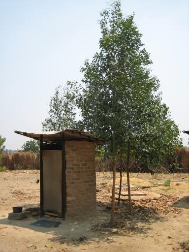 Eucalyptus trees growing arond an arborloo. Photo: Peter Morgan. Harare 2010.