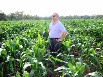 Maize field without biochar. Photo: biochar.info.