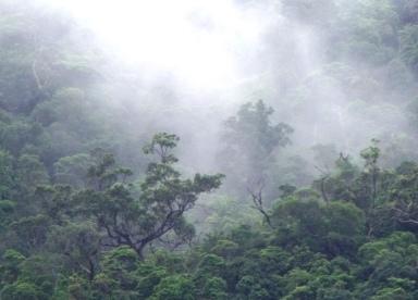Emergent trees, sunlight and mist, Mount Whitfield National park, Cairns, Australia.