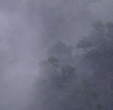 Misty, other-worldly rain forest, Mt. Whitfield, Cairns.