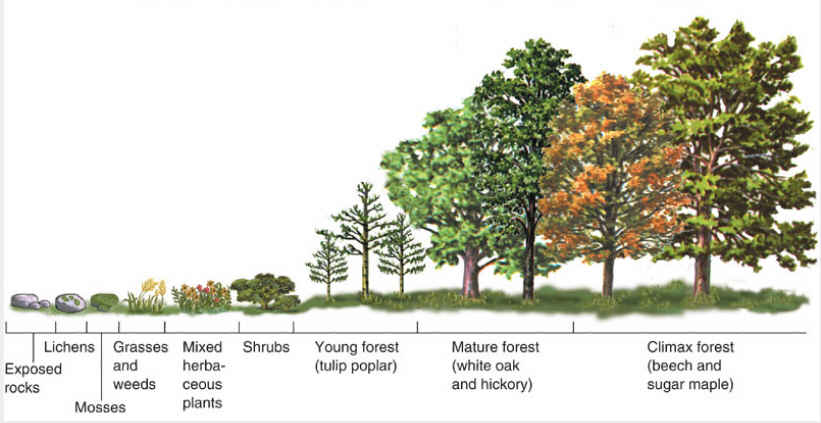 Ecosystems: Ecological Succession and Climatic Climax