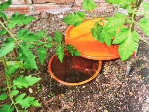 Terra cotta pot used for irrigation. Photo: Maddy Harland.