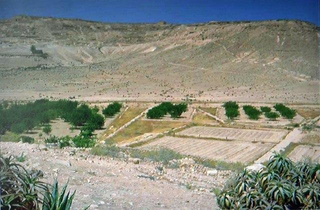 Succulent Aloe arborescens plants in the foreground. Wadi Avdat, Negev desert, Israel. Photo: Dieter Prinz.