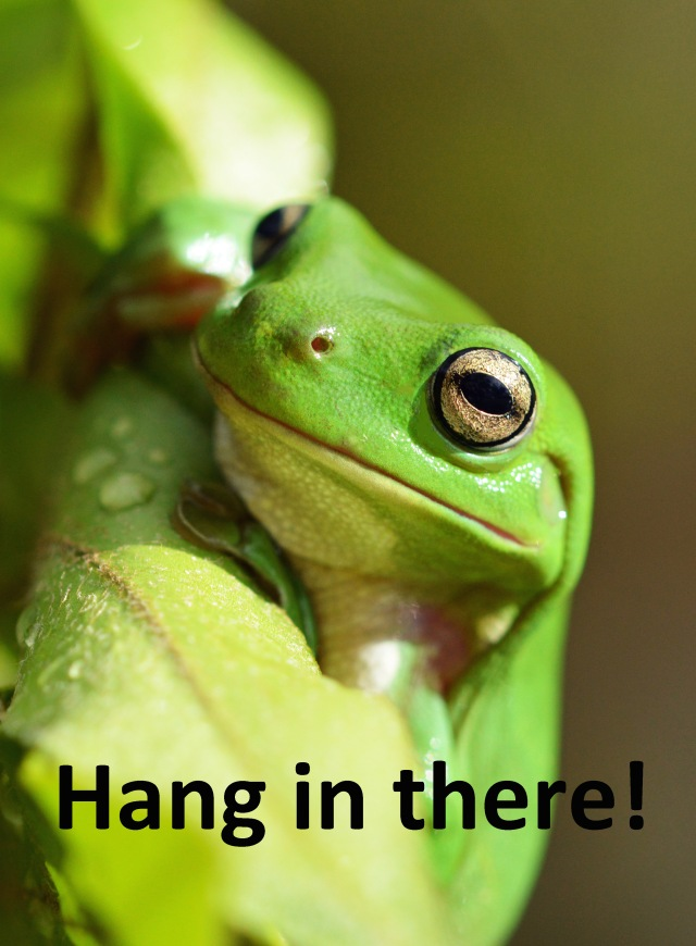 """Hang in there!"" frog poster by David Clode."