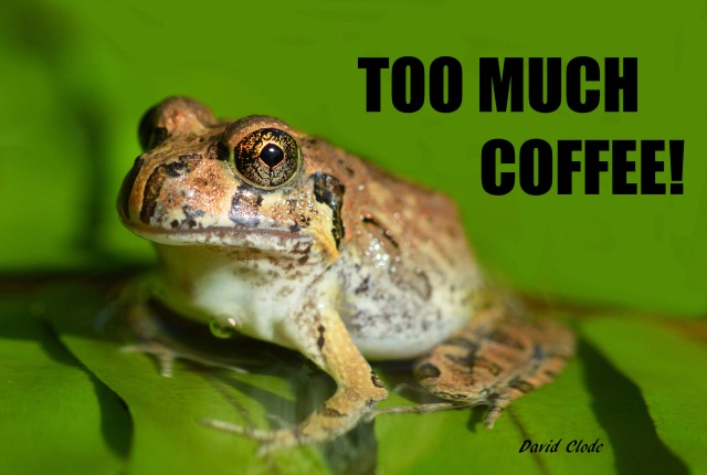 """Too Much Coffee!"" poster by David Clode."