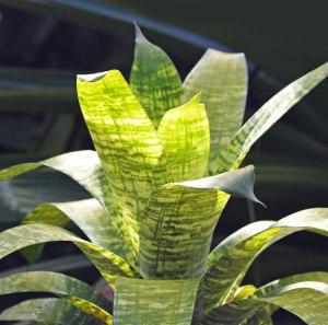A backlit Bromeliad.
