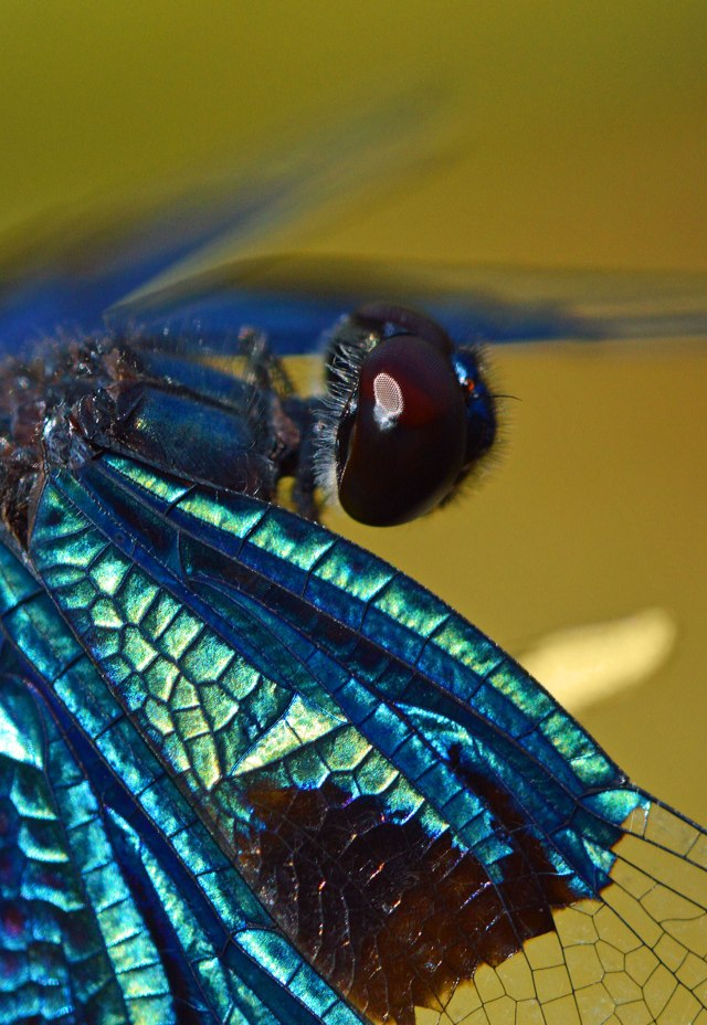 Dragonfly photo by David Clode.