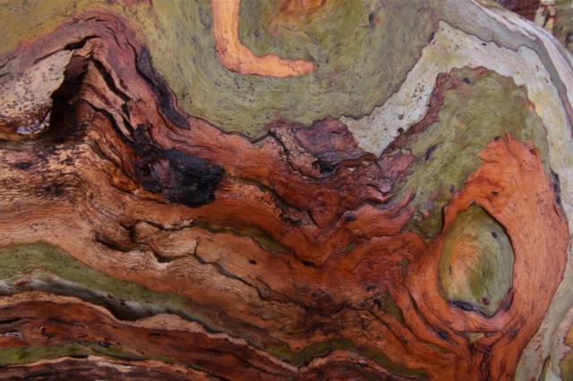 Detail, Eucalyptus bark. Photo: Bryan Clode.