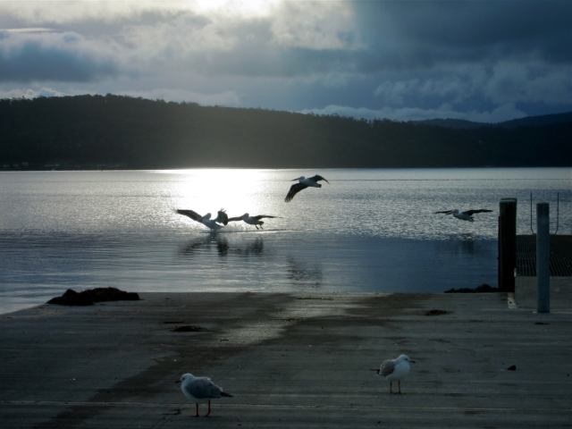 Pelican seascape, Tasmania. Photo: Bryan Clode.