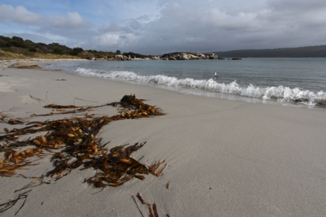 Tasmanian seascape. Photo: Bryan Clode.