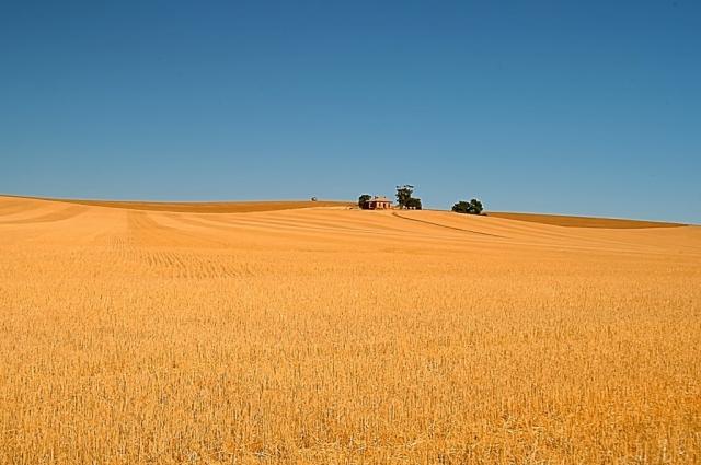 Wheat farm, South Australia. Photo: Bryan Clode.