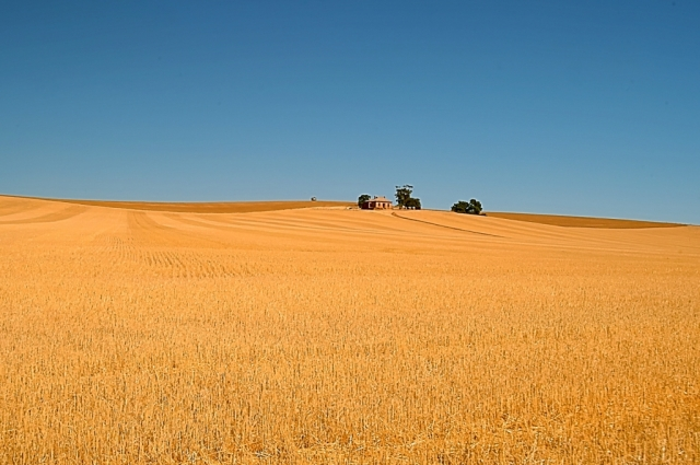 Wheat farm, South Australia. Photo: Bryan Clode.