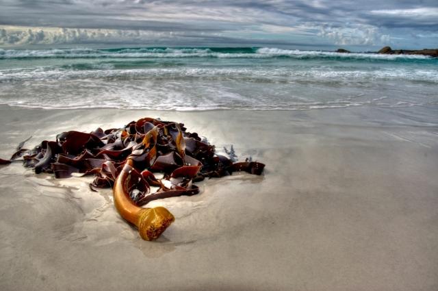 Tasmanian seascape (St Helens). photo: Bryan Clode.