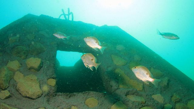 Artificial reef. Photo: Wikimedia.