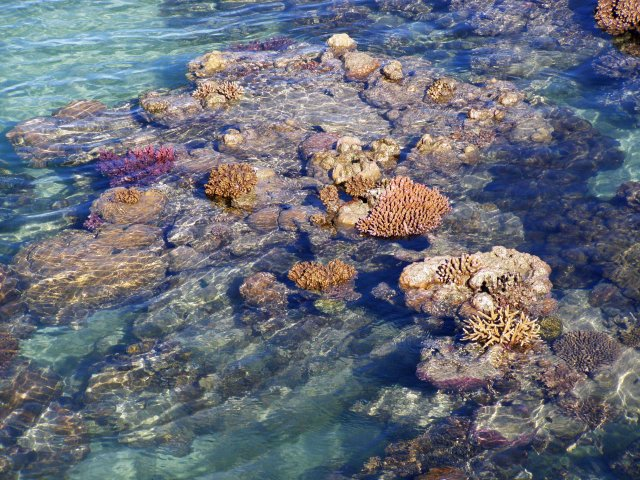 Exposed coral reef at low tide, Green Island. Photo: David Clode.