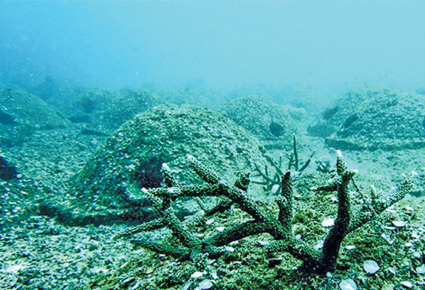 Articial reefs which look close to natural, even before anything is growing on them. Varying the sizes and distances between the reefs would also add to a natural look. Photo: philstar.com.