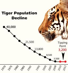 Tiger decline. Graph: www.buzzle.com.