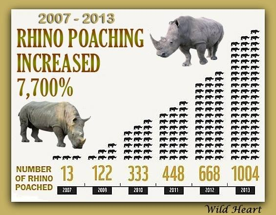 Rhino poaching. Graph: fightforrhinos.com.