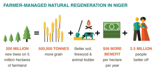 Benefits of Farmer Managed Natural Regeneration.