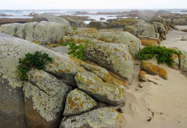 Natural rock garden Beerbarrel Beach, Tasmania. Photo: David Clode.