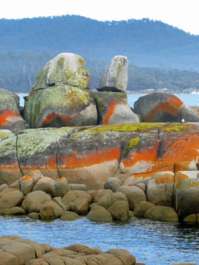 Lichen covered boulders, Binalong Bay, Tasmania. Photo: David Clode.