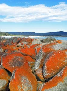 Lichens grwoing on granite boulders, Binalong Bay, Tasmania. Photo: David Clode.