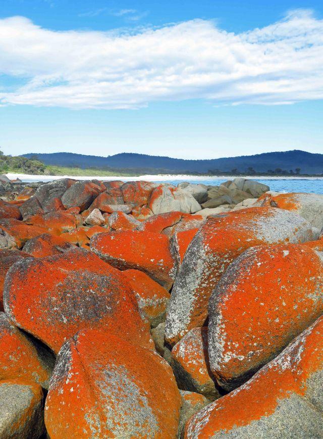 Lichens grwoing on granite boulders, Binalong Bay, Tasmania. Photo: David Clode.