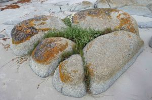 Natural rock garden, Beerbarrel beach, Tasmania. Photo: david Clode.