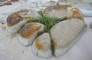 Natural rock garden, Beerbarrel beach, Tasmania. Photo: david Clode.