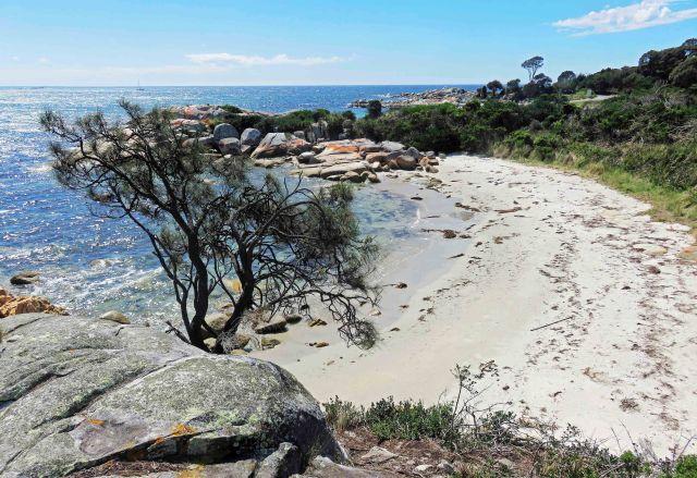 Allocasuarina verticillata, Burns Beach. Photo: David Clode.