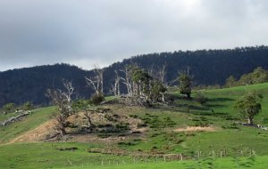 Erosion and eucalyptus die-back, North-east Tasmania.