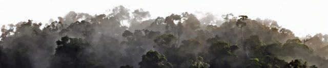 Rain forest panorama 2. Photo: David Clode.