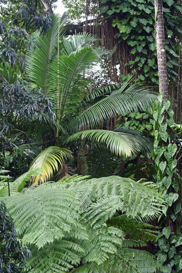 Cairns Botanic Gardens.
