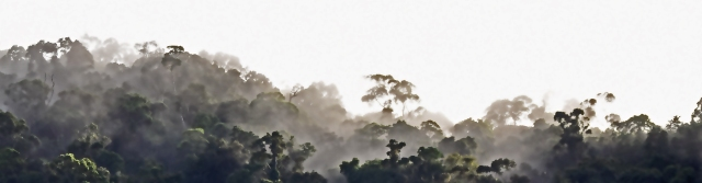 Misty Rain forest panorama. Photo: David Clode. Mt Whitfield, Queensland, Australia.