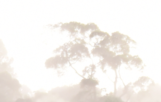Misty Tree. Photo: David Clode.