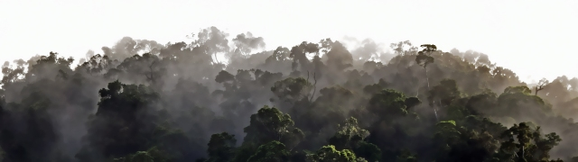 Misty rain forest panorama 2. Photo: David Clode. Mt Whitfield, Australia.