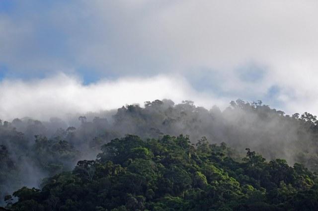 Misty Forest 3. Photo: David Clode. Mt Whitfield, Australia.