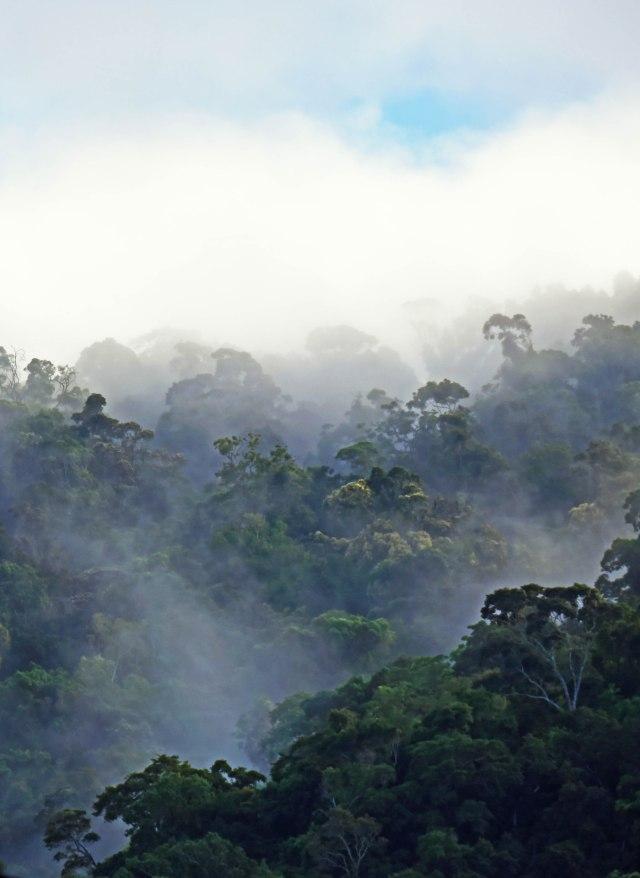 Misty Forest 4. David Clode.