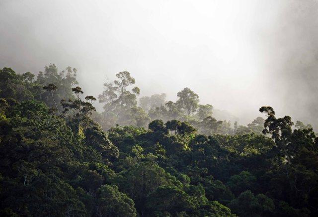 Misty Forest. Photo: David Clode.