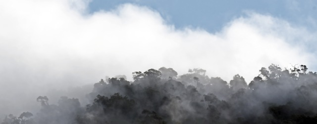 Mist rain forest panorama 3. Photo: Mt Whitfield, North Queensland, Australia. David Clode.