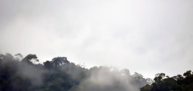 Misty rain forest panorama 4. Photo: David Clode.