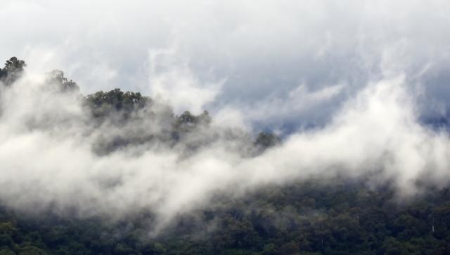 Misty rain forest panorama 5. Mt Mooroobool, cairns, Australia. Photo: David Clode.