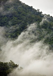 Misty forest, Mt Mooroobool, Cairns, Australia. Photo: David Clode.