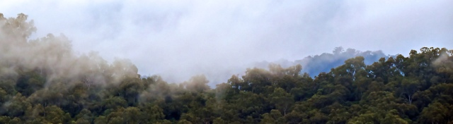 Misty rain forest panorama 6. Photo: David Clode.