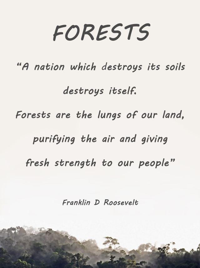 Forests poster. Photo and poster by David Clode.