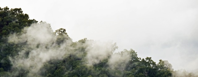 Misty rain forest panaorama 5. Photo: David Clode.