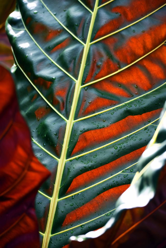 Tropical foliage. Photo: David Clode