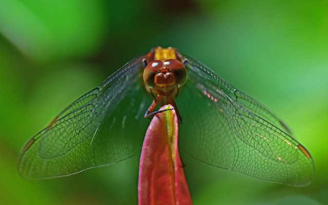 Dragonfly portrait. Photo: David Clode.
